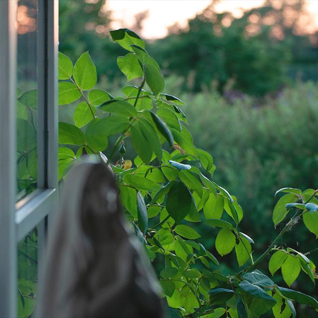 ID Coach Borup, Mindfulness, grønne blade